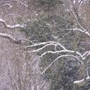 Winter 004
